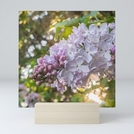 Spring Lilacs Mini Art Print