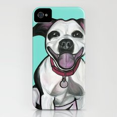Dolce the Pitbull Slim Case iPhone (4, 4s)
