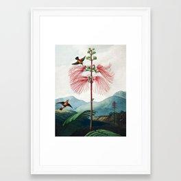 Large Flowering Sensitive Plant - The Temple of Flora Framed Art Print