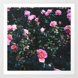 city of roses Art Print