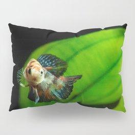 Koi Betta Boy Pillow Sham