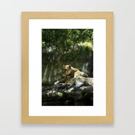 Portland Lioness Framed Art Print