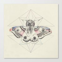 moth Canvas Prints featuring Moth by Wolfe Knight
