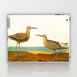 Long-legged Sandpiper Bird Laptop & iPad Skin