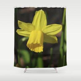 Golden Daffodil Shower Curtain