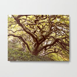 Tree of Knowledge Metal Print
