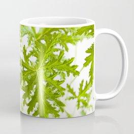 Pelargonium citrosum plant foliage macro Coffee Mug
