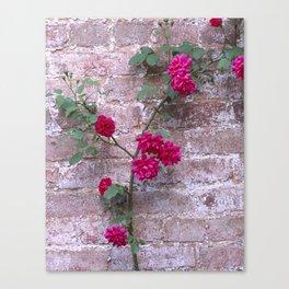 Blaze Climbing Rose Canvas Print