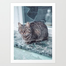 Cat in front of a Window Art Print