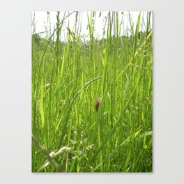 long green grass IV Canvas Print