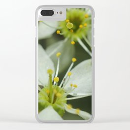 Apple blossom at spring Clear iPhone Case
