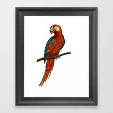 Parrot perroquet Framed Art Print