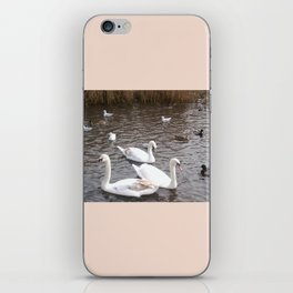 Swans 4 with other birds iPhone Skin