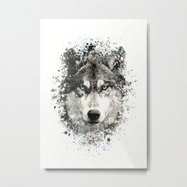 Wolf with blue eyes Metal Print