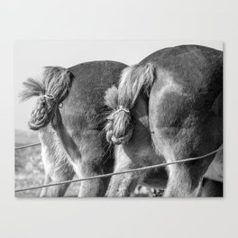 Working Asses Canvas Print