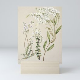 Antique plant Veronica drawn by Sarah Featon (1848-1927) Mini Art Print
