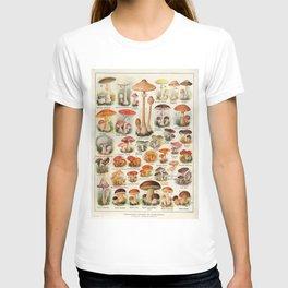 Mushroom Varieties Chart Species Vintage Scientific illustration French Language T-shirt