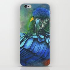Macaw Magic iPhone & iPod Skin