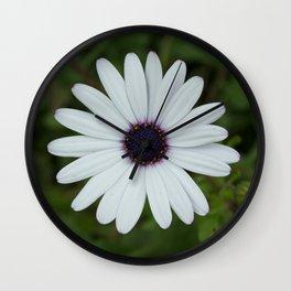 Purple Eyed Daisy Wall Clock