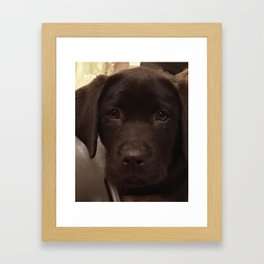 Cute Lab Puppy Framed Art Print