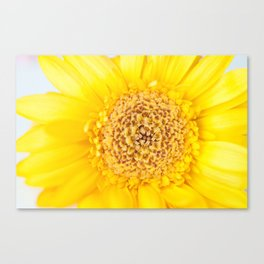 Sunny Summer Love - Yellow Gerbera #1 #decor #art #society6 Canvas Print