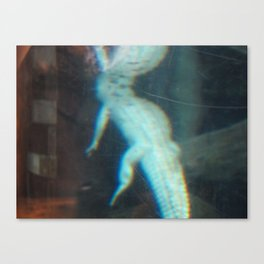 Albino Alligator 2 Canvas Print
