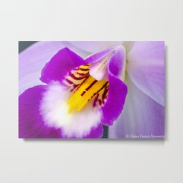 Cattleya Percivaliana Orchid Metal Print