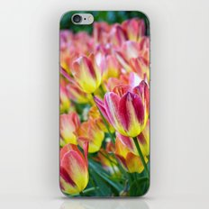 The Last Hurrah of Spring iPhone & iPod Skin