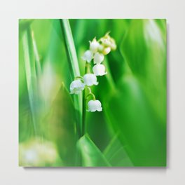 Lily  of the Valley Nature Photography Metal Print