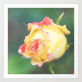 Rose in yellow Art Print