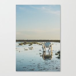 Camargue Horses XXI Canvas Print