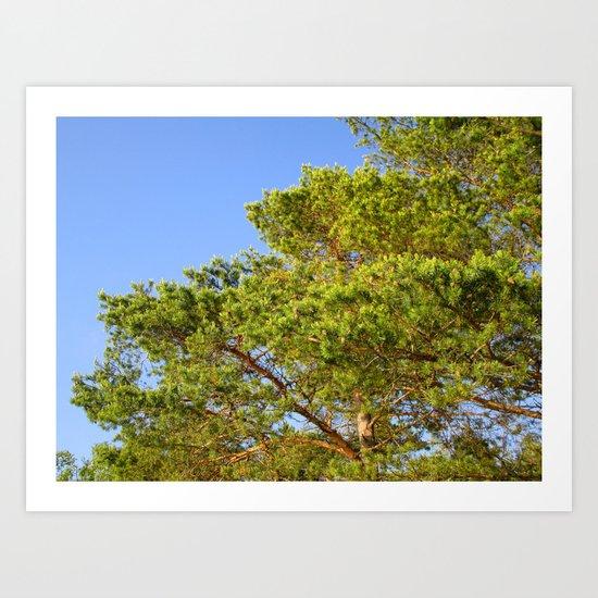 Treetop Art Print
