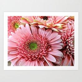 Light Pink Daisies Art Print