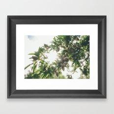 Almond Tree Framed Art Print