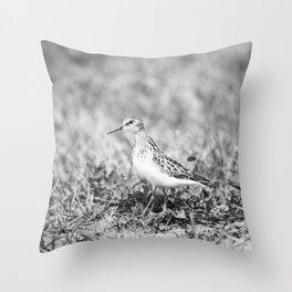 Common Snipe 5 Throw Pillow