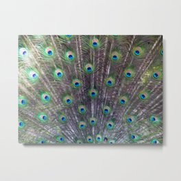 A Peacock's Trance Metal Print