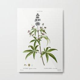 Chaste tree, Vitex agnus-castus from Traité des Arbres et Arbustes que l'on cultive en France en ple Metal Print