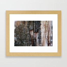 Tree Bark close up Framed Art Print