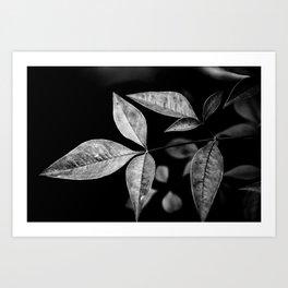 Night time flora Art Print