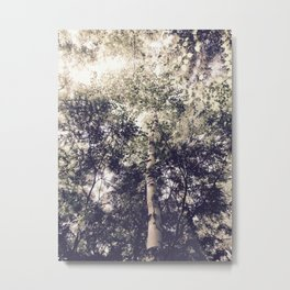 Dappled Light Filtered Through Trees Metal Print