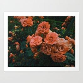 ROMAN ROSES Art Print