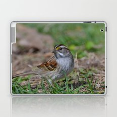 A White Throated Sparrow Laptop & iPad Skin