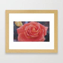 Last Rose of fall Framed Art Print