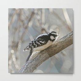 woodpecker soaks up the sun Metal Print