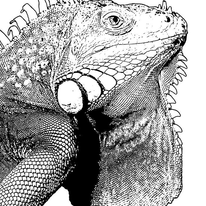 Iguanas (animals) Leggings