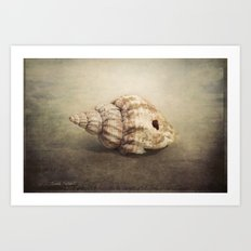 The Sea Shell Art Print