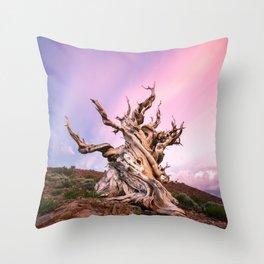 Ancient Bristlecone Pine Tree Sunset Throw Pillow