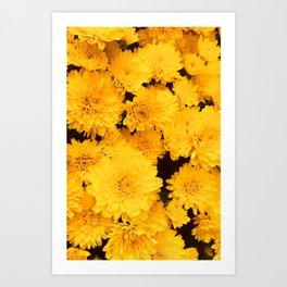 Bright Golden Holiday Mums Art Print