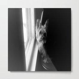 Puppy in the Light and Shadow Metal Print