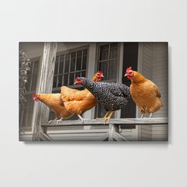Get Off The Porch Chickens! Metal Print